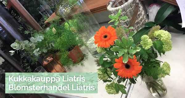 Blomsterhandel Liatris - Pargas